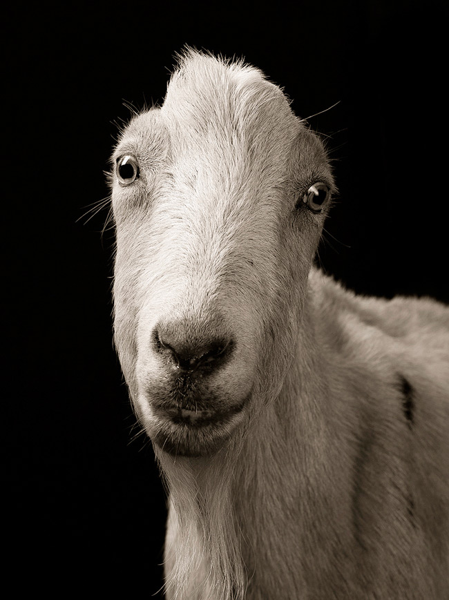 портреты животных фото