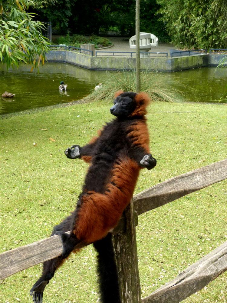 прикольные фотки животных