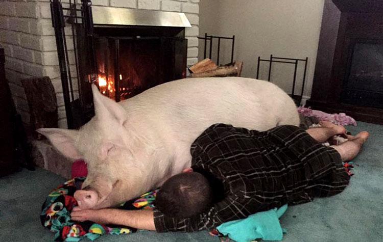 просто свинья