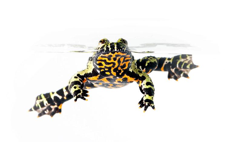 редкие лягушки