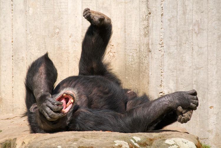 смешные картинки до слёз животные
