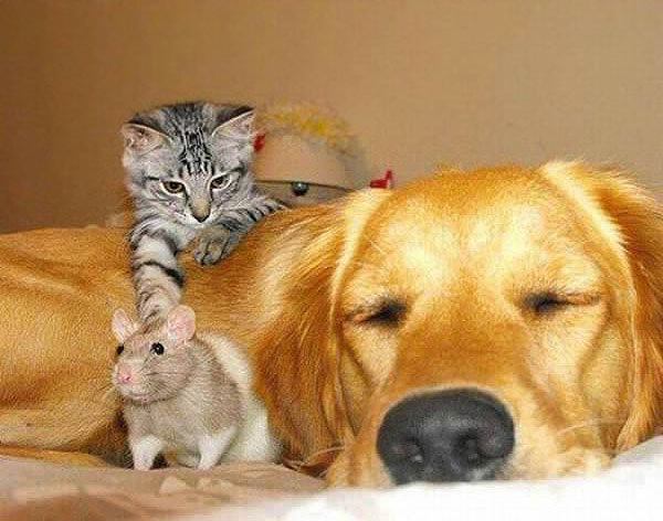 собака кот мышь