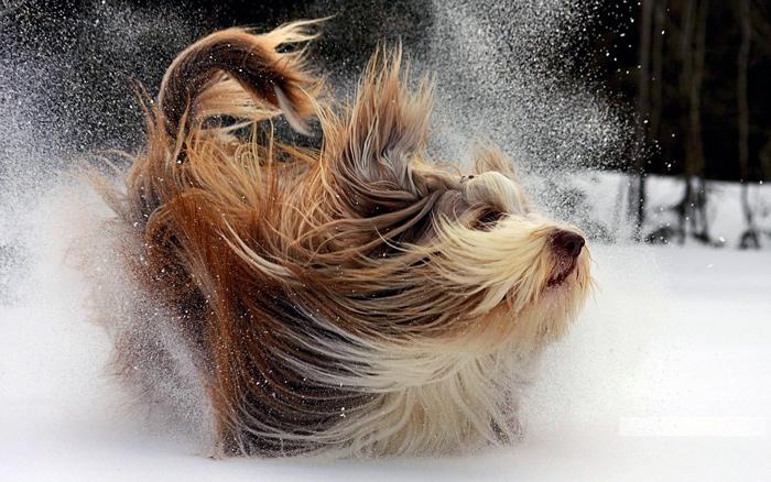 собака снег