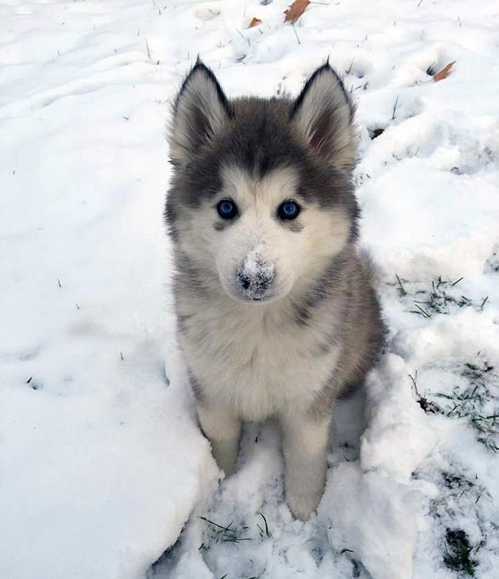 собаки в снегу фото