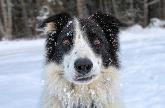 собаки зима фото