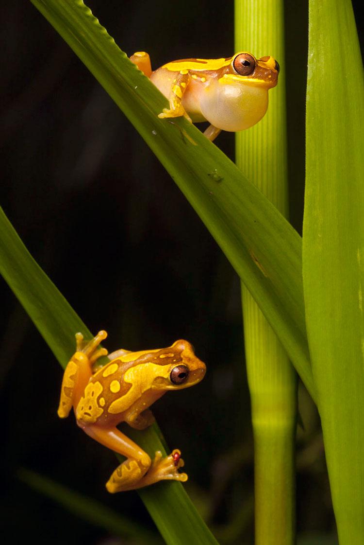 виды лягушек фото