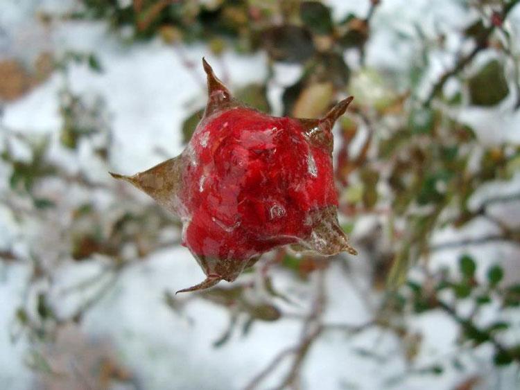 замёрзшие цветы