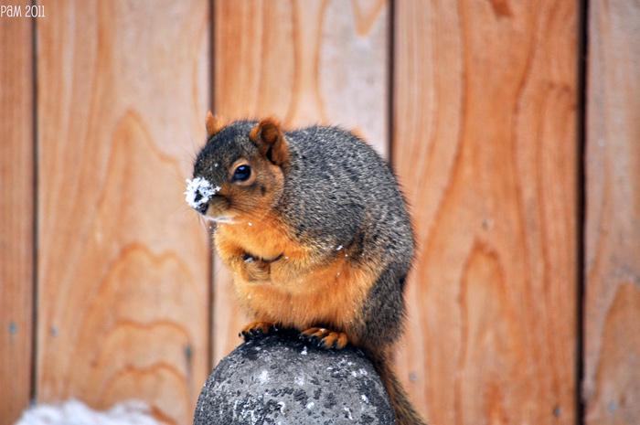 животные на снегу фото