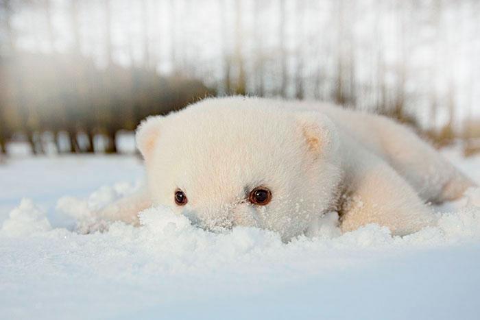 животные на снегу картинки