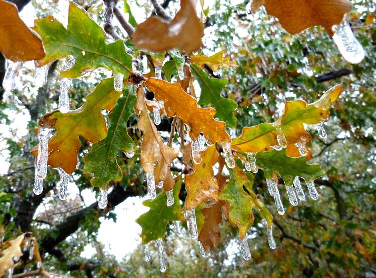 зима деревья картинки