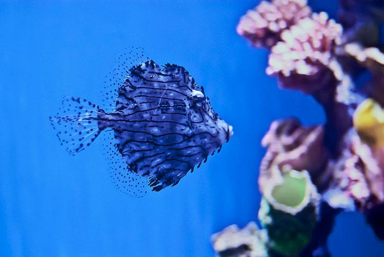 аквариум океанариум