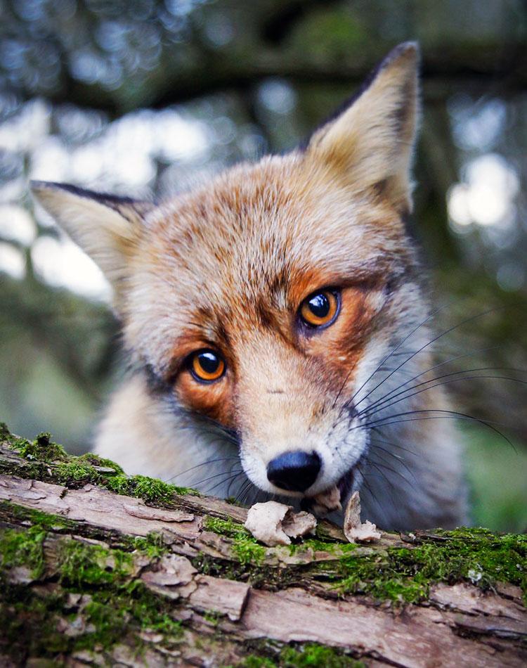 фото лесных животных