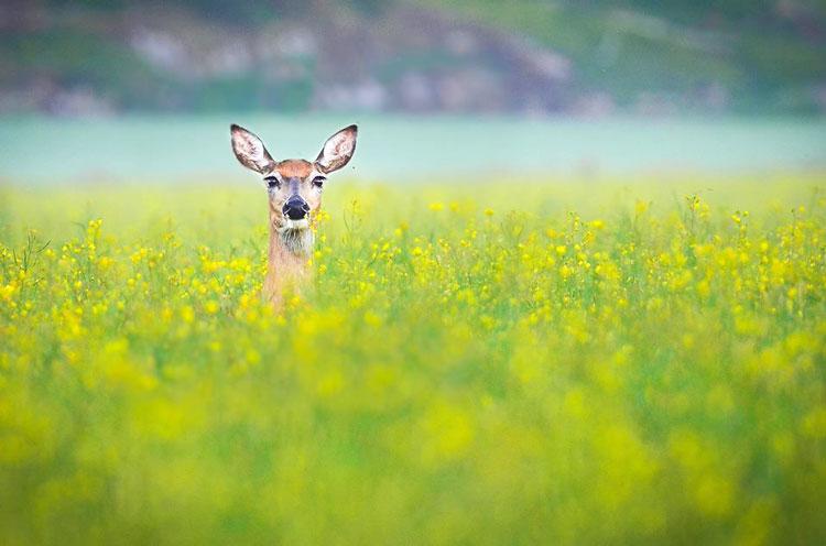 фото природы и животных