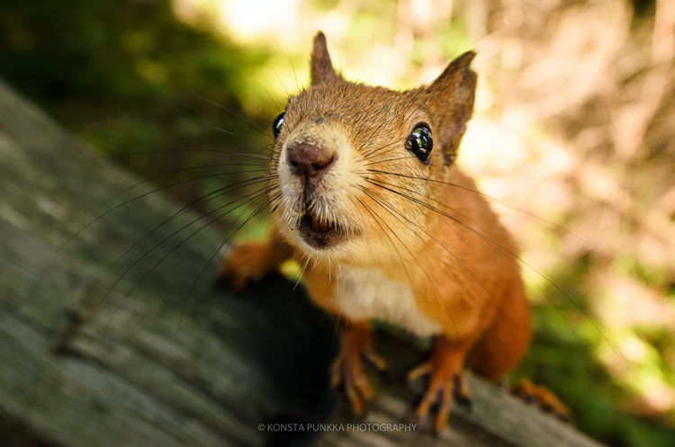 картинки природа и животные