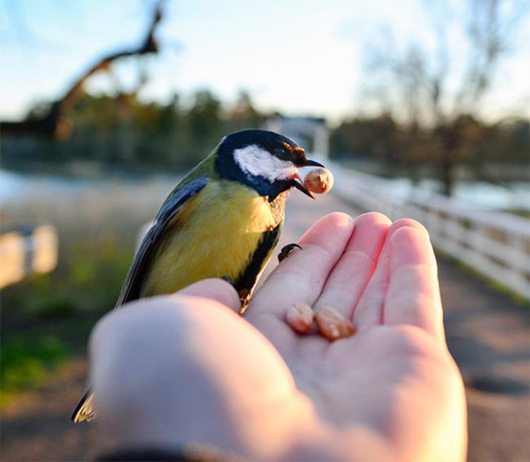 картинки животных и птиц
