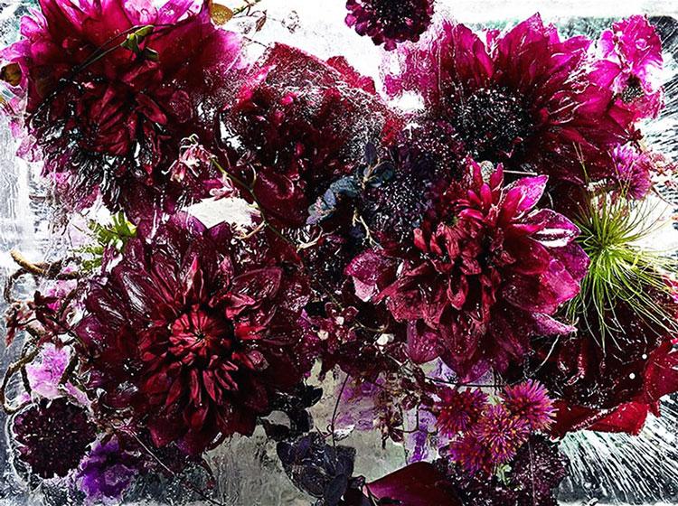 ледяные цветы фото