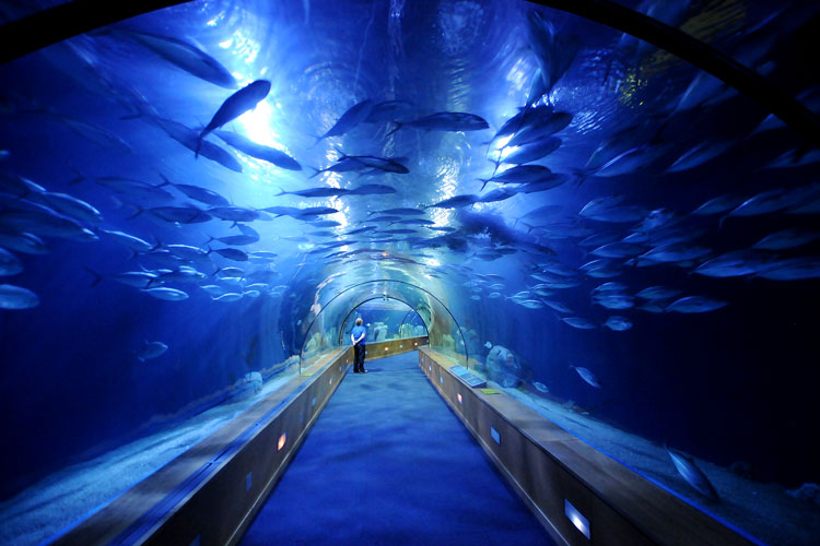 океанариумы мира