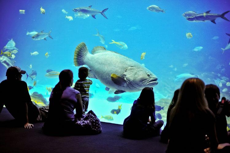 самые большие аквариумы