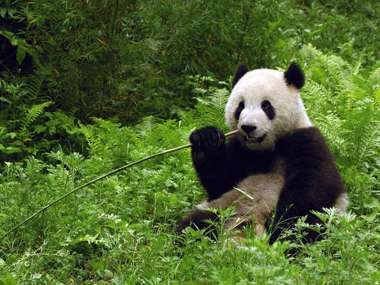 смотреть фото животных смешные