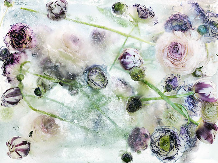 замороженные во льду цветы