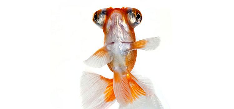 декоративные рыбки фото