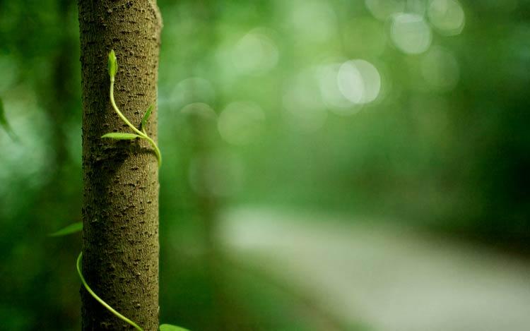 дерево картинки фото