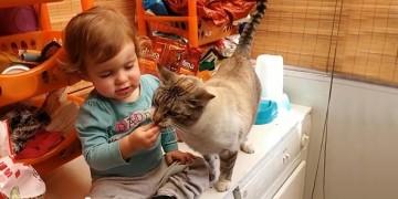 девочка кормит кота