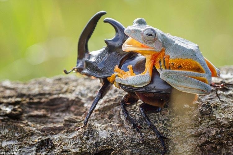 фото лягушек смешные