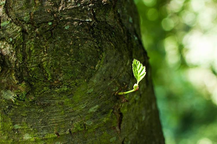 фото стволов деревьев