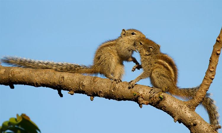 фотографии целующихся животных