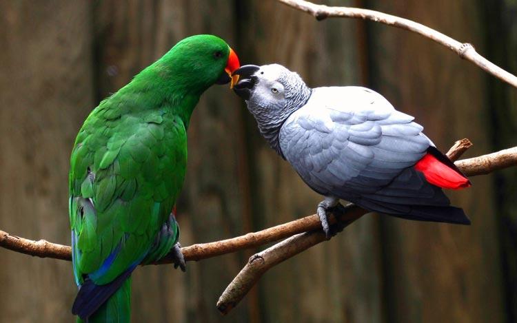 фотографии животных любовь