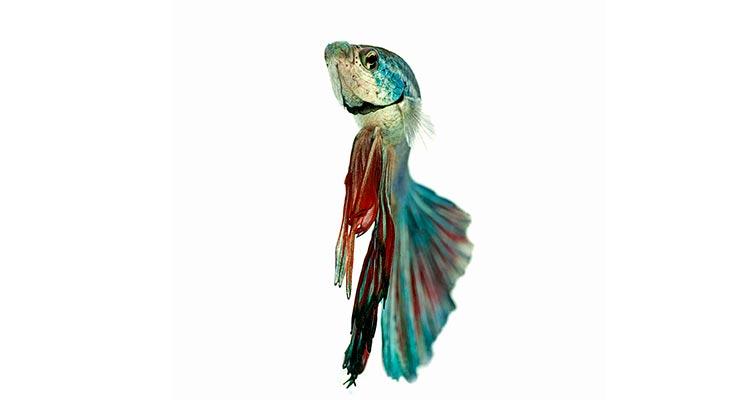 какие бывают аквариумные рыбки фото и их названия