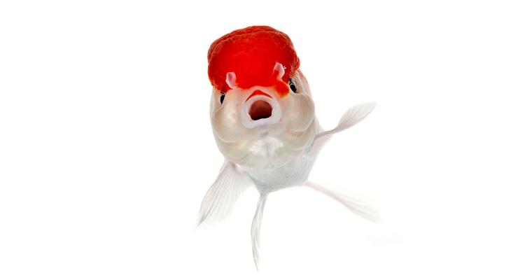 какие бывают аквариумные рыбки названия