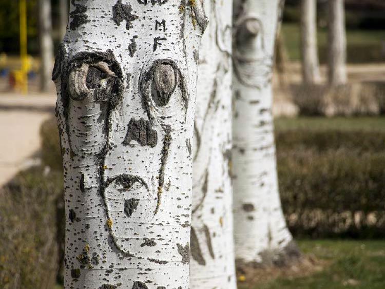 картинка ствол дерева без листьев