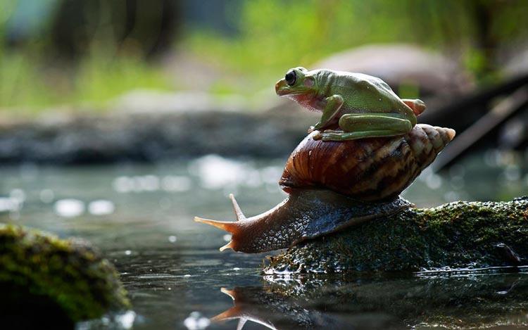 картинки жабы и лягушки
