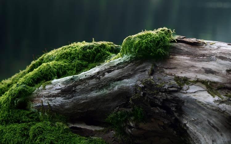 красивые деревья фото