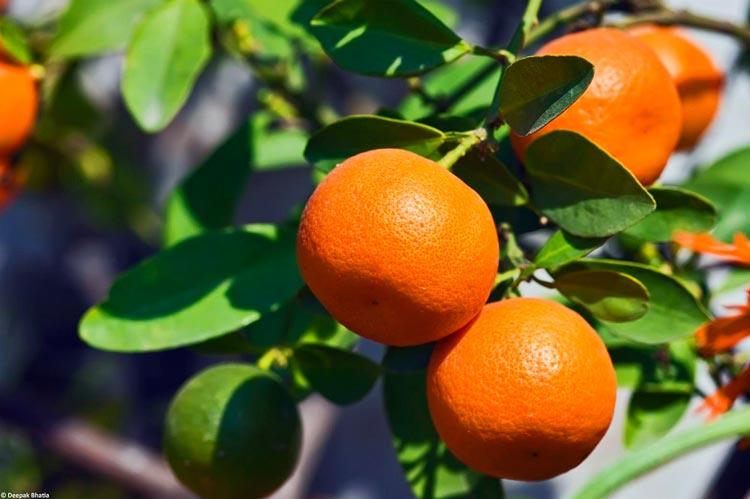 красивые картинки фрукты