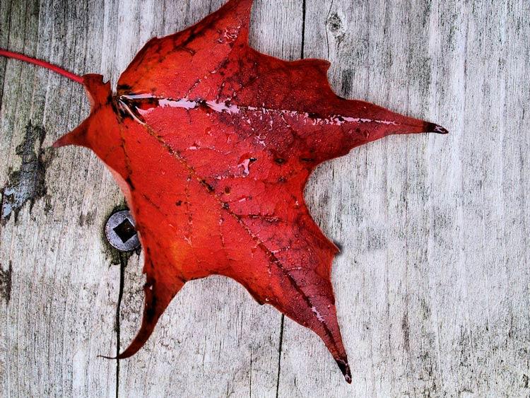 лист дерева фото