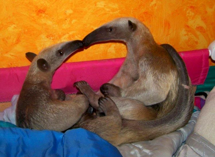 любовь между животными