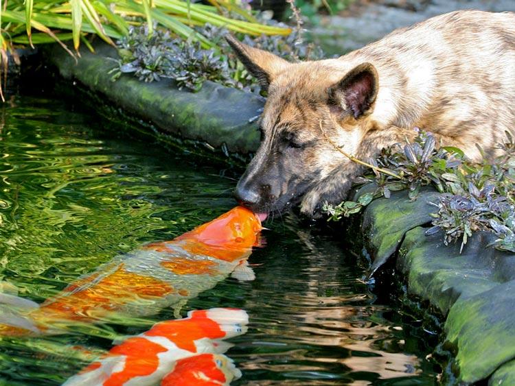 любовь в животном мире