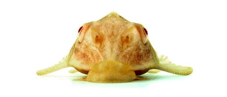 необычные аквариумные рыбки фото