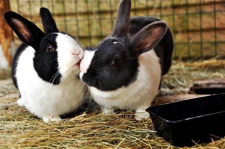 поцелуи животных фото