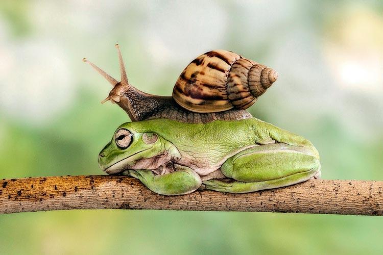 прикольные лягушки картинки