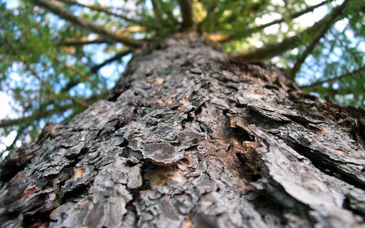 разные деревья картинки