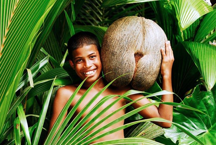 семена пальмы фото