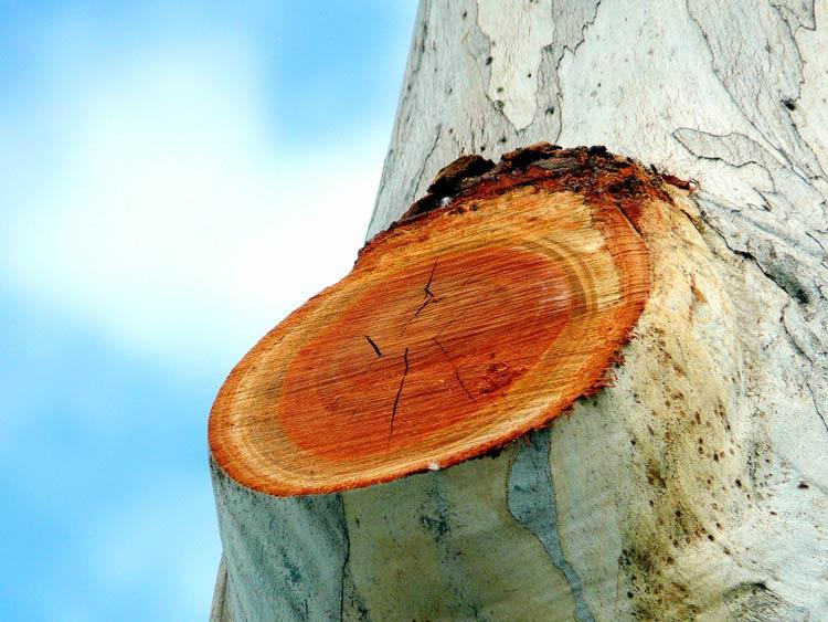 ствол дерева картинки