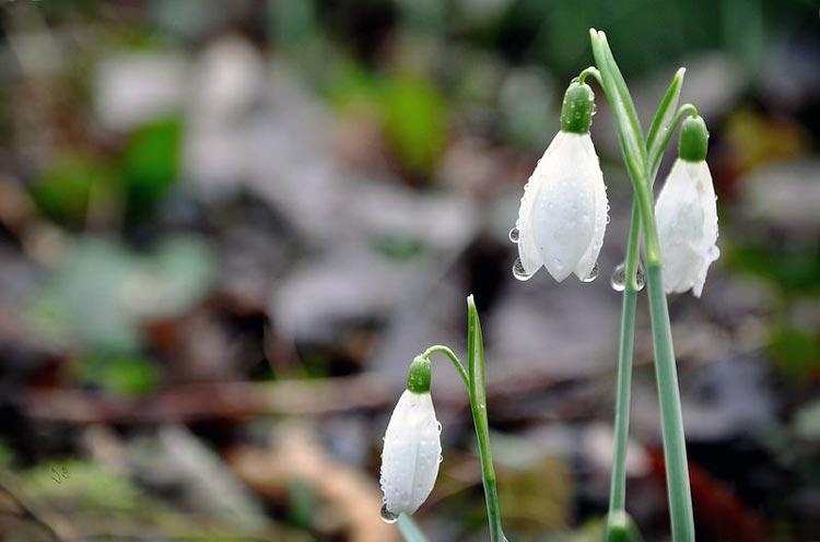 весна близко