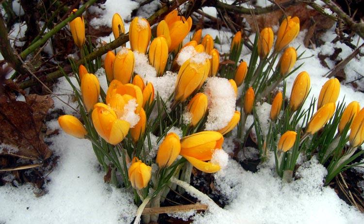 весна цветы