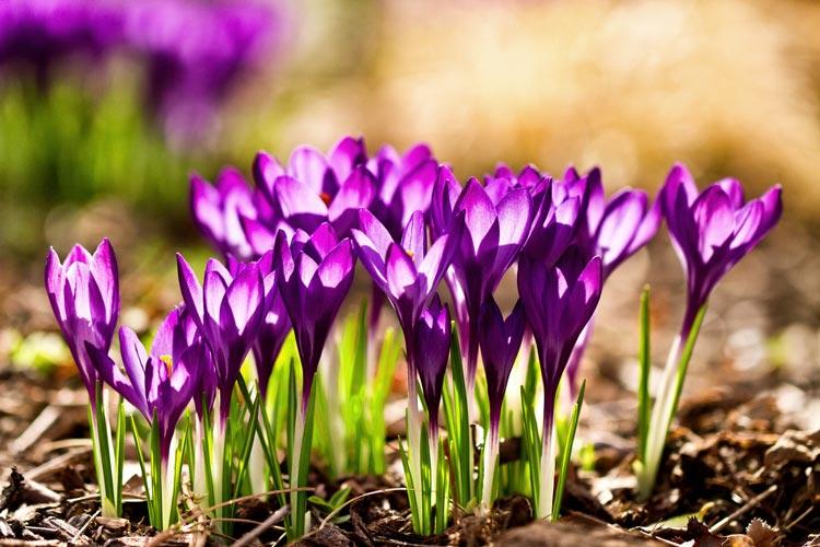 весна в картинках