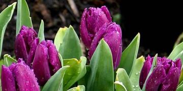 ждём весну